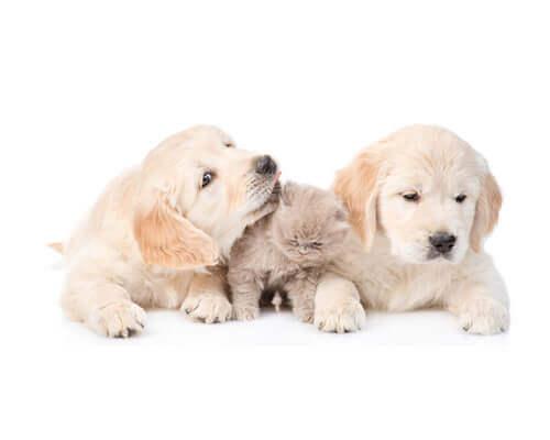 PMA huisdierverzekering